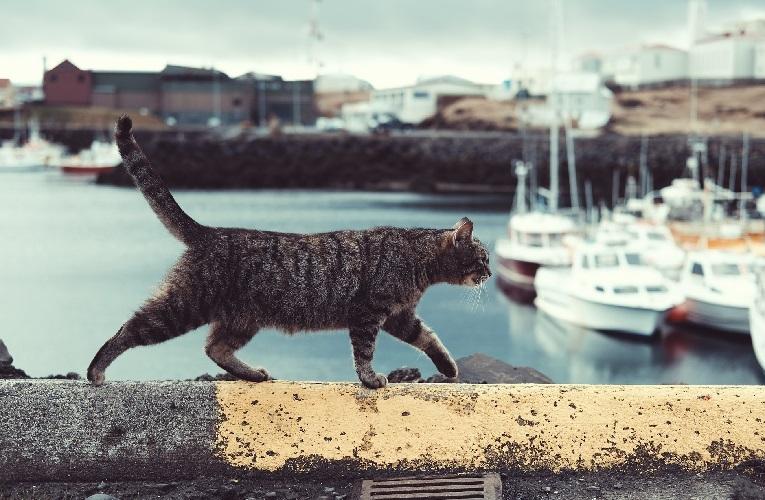Коты матросы