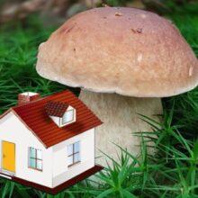Какие грибы лучше выращивать на даче?