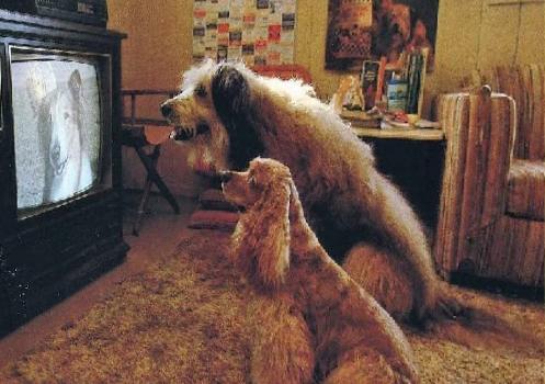 Животные и телевизор