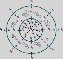 динамика внутри ядра клетки