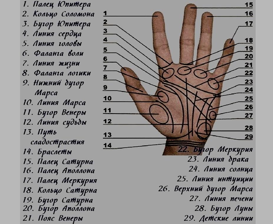 отпечатки пальцев хиромантия