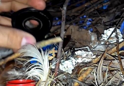 коллекция в гнезде