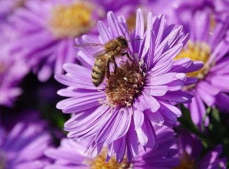 Березовые слезы и их тайна, пчелы
