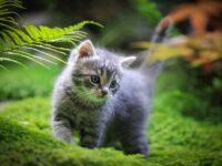 Кошки и чтение мыслей