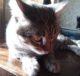 Кот и необычный случай с вазой