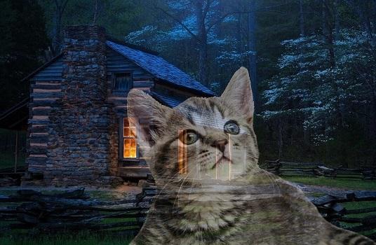 Кот спаситель, Дед Архип и настоящая дружба