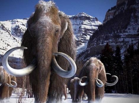 Мамонты и поиски живого мамонта
