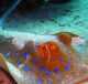 Электрические рыбы и генерация электричества
