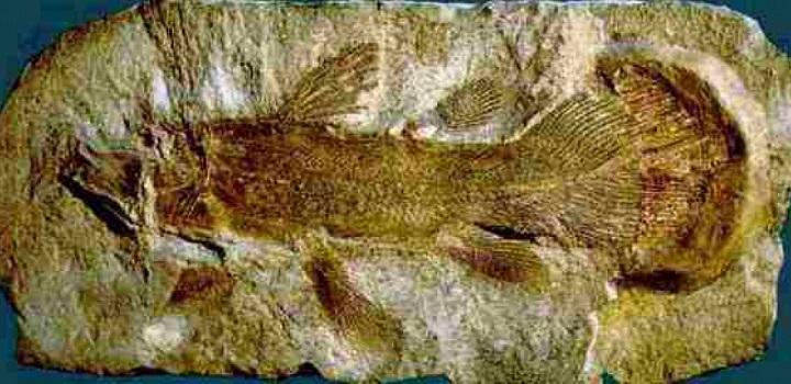 Латимерия или живые ископаемые