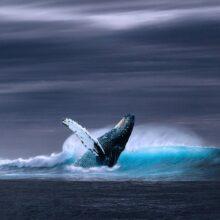 Марианская впадина и глубины Мирового океана