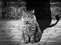 Две судьбы и серый кот