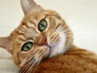 Тест. Кошки и вопросы с ответами