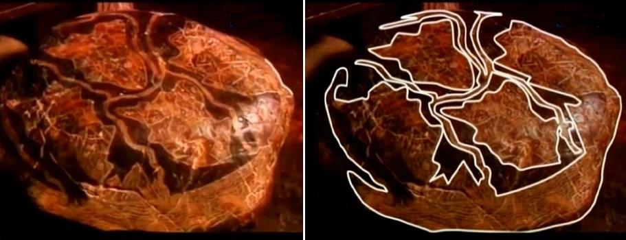 Человек и эпоха динозавров