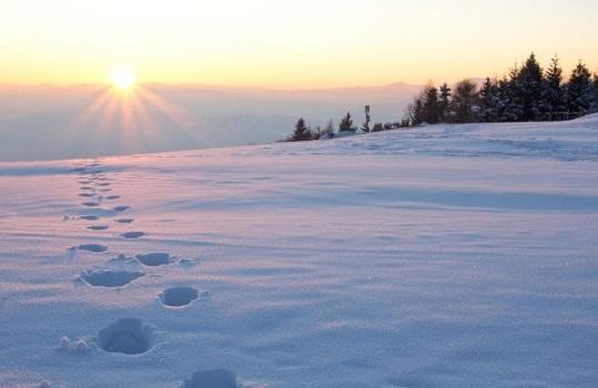 Снежный человек Северной Америки и Канады