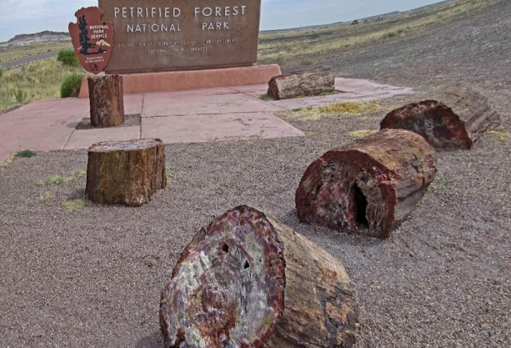 Заповедник «Окаменелый лес» в США