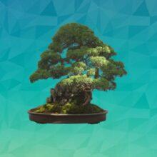 Бонсай или миниатюрное дерево в доме