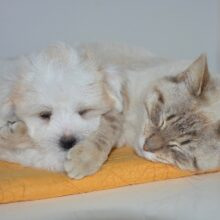 Какое животное завести — кошку или собаку