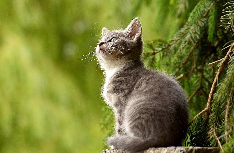 Какое животное завести - кошку или собаку