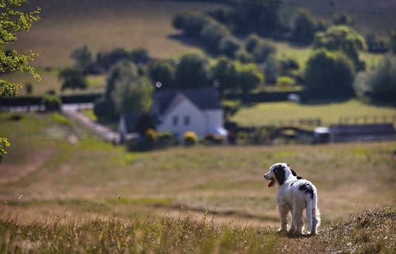 Суточный рацион (в граммах) для щенка собак крупных пород