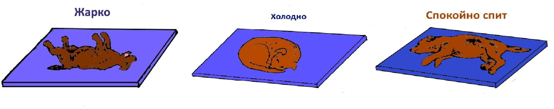 Щенок - выбор щенка - воспитание и обучение щенка
