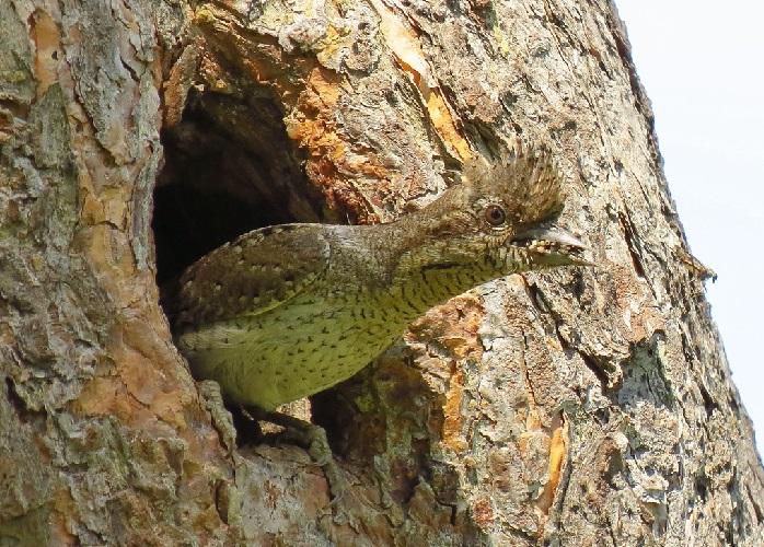 Как защищаются птицы в дикой природе