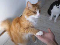Дрессировка домашних кошек и ее методы