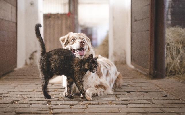 Зоотерапия и ее преимущества