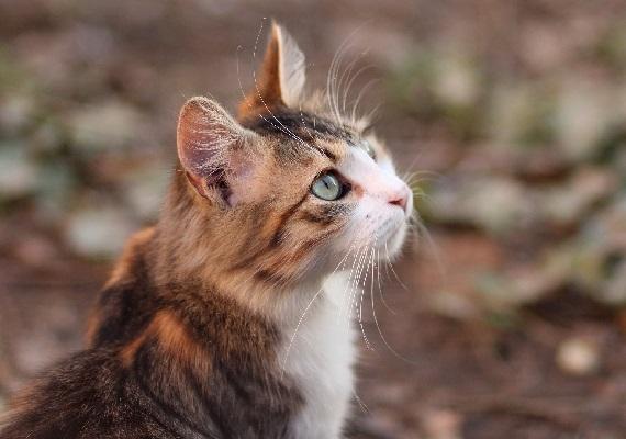 Как дать таблетку кошке и еще немного полезных советов