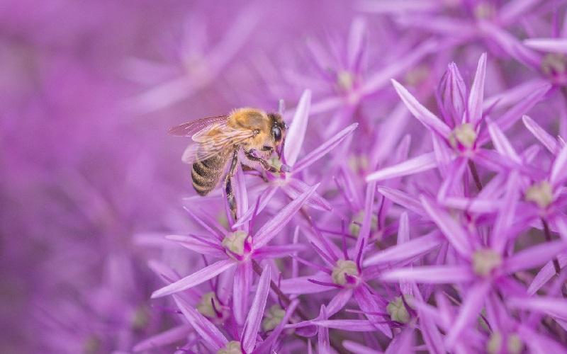 Сказка пчела и паук