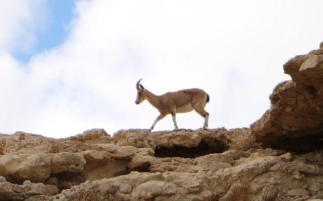 Пустыня Гоби и на пределе жизни