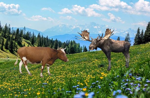 Алтайская сказка конь, корова и белый лось