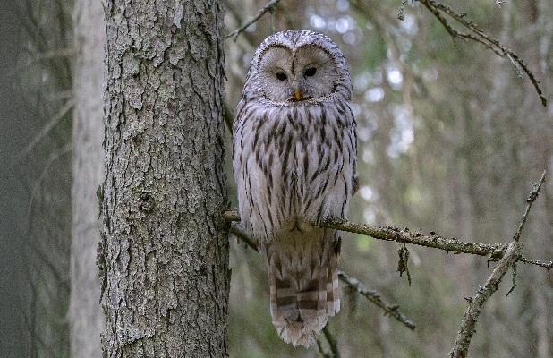 Сказка о том, почему сова живет в лесу и охотится ночью
