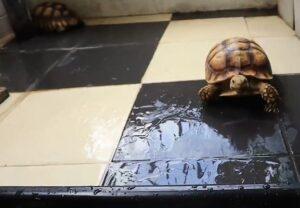 Черепаха и ее семейство