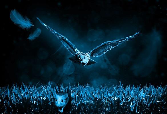 Ночное нападение и друзья наши меньшие